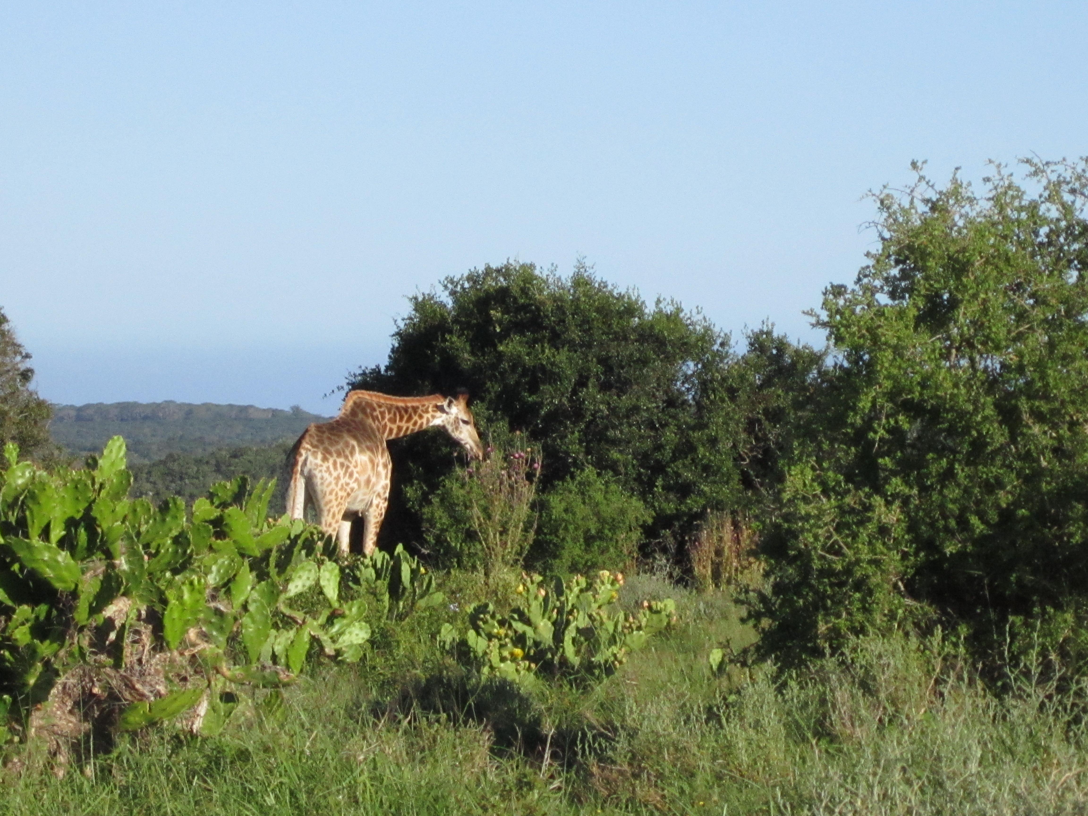 Africano de Bush Safaris en Oudtshoorn - Ver nuestros animales de cerca