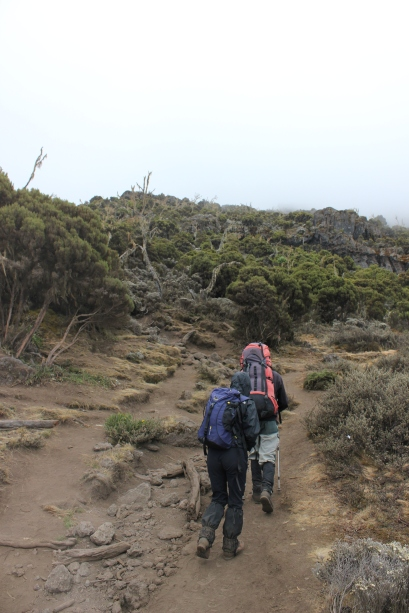 Climbing Kilimanjaro 7 Day Machame Route Tour - Day 3 Shira Camp
