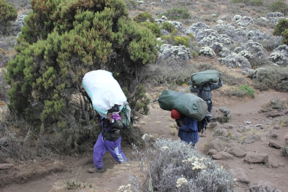 What to Look for When Choosing a Company to Climb Kilimanjaro