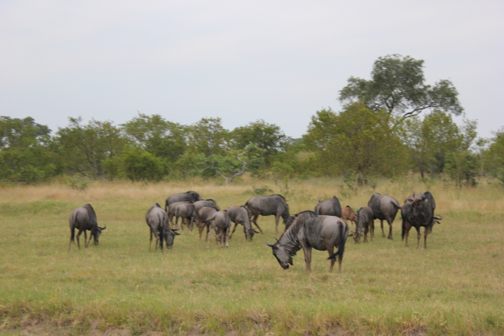 The Great Migration – Sensational Game Viewing in the Serengeti Plains