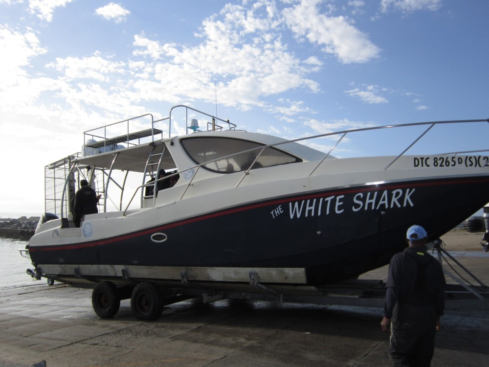 Whale Watching and Shark Cage Diving in South Africa