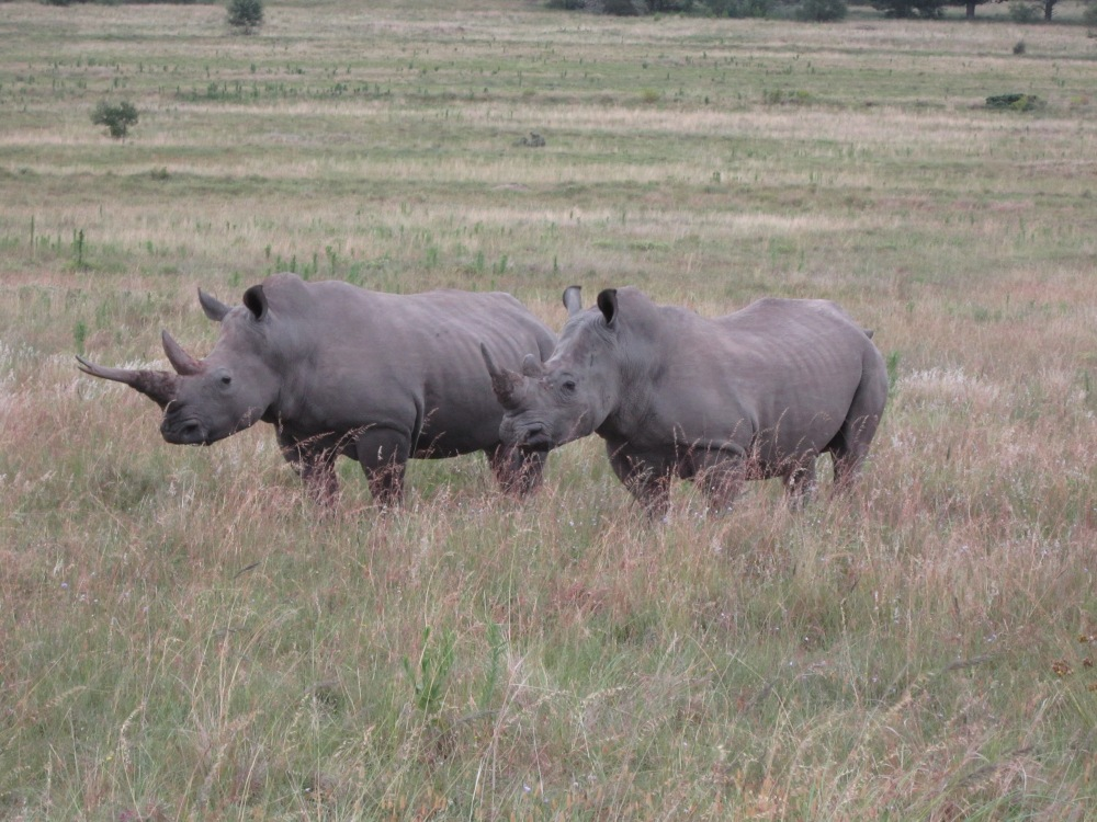 It's World Rhino Day 2013 – and the Battle Continues…