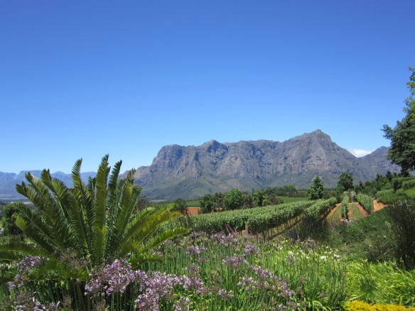 Connoisseur Tours South Africa