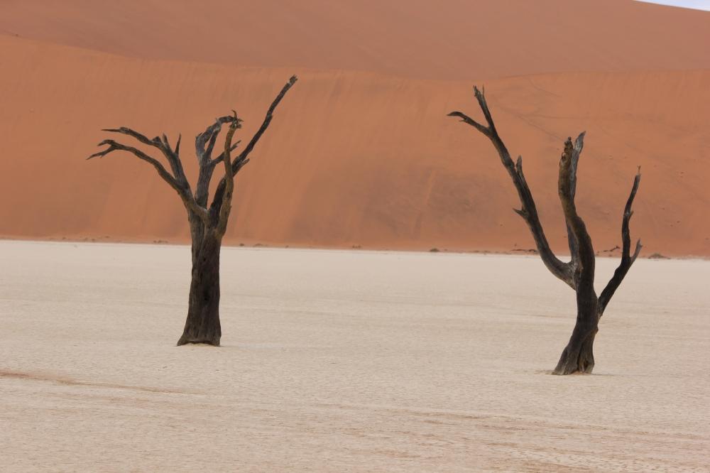 safari holidays namibia
