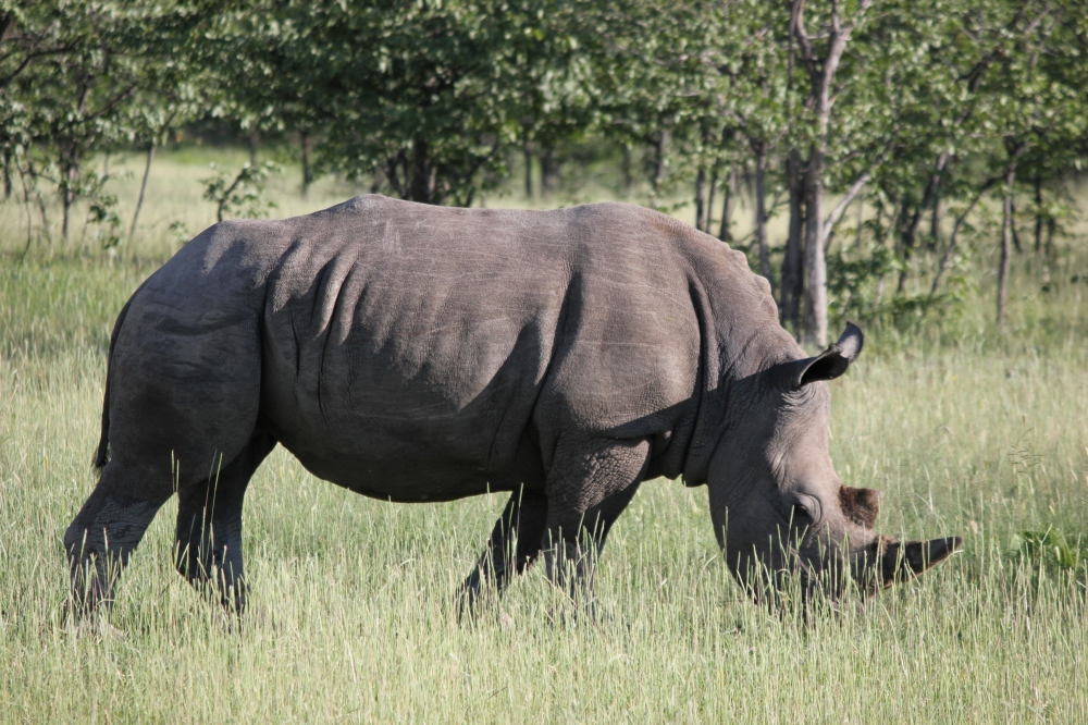 World Rhino Day 2016