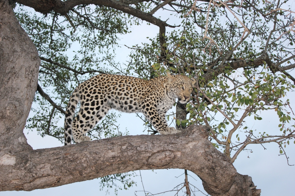 winter safari holiday south africa