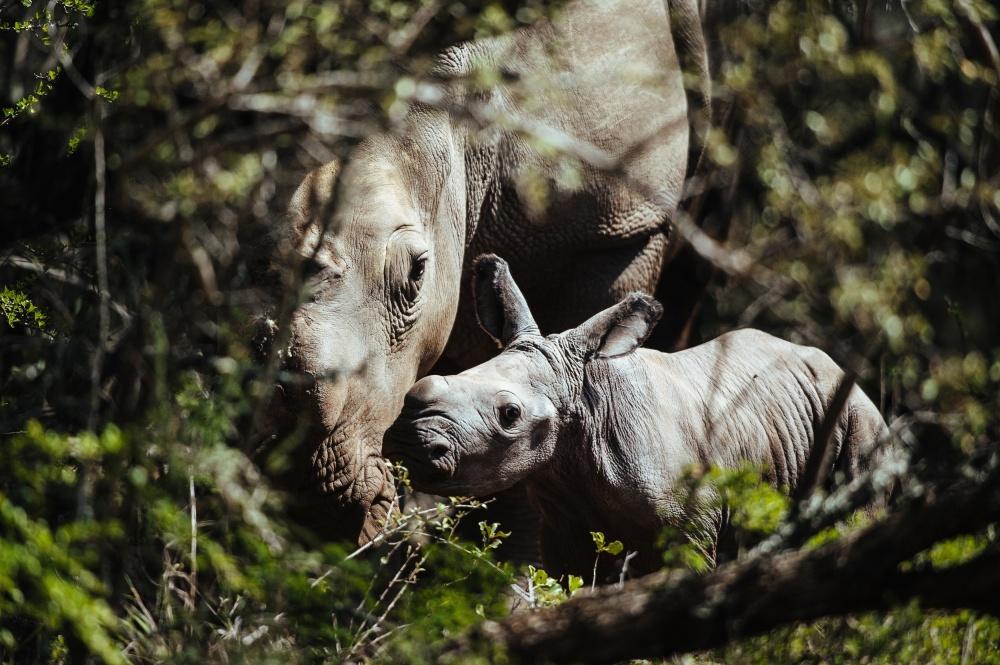 Rhino Poaching statistics 2014