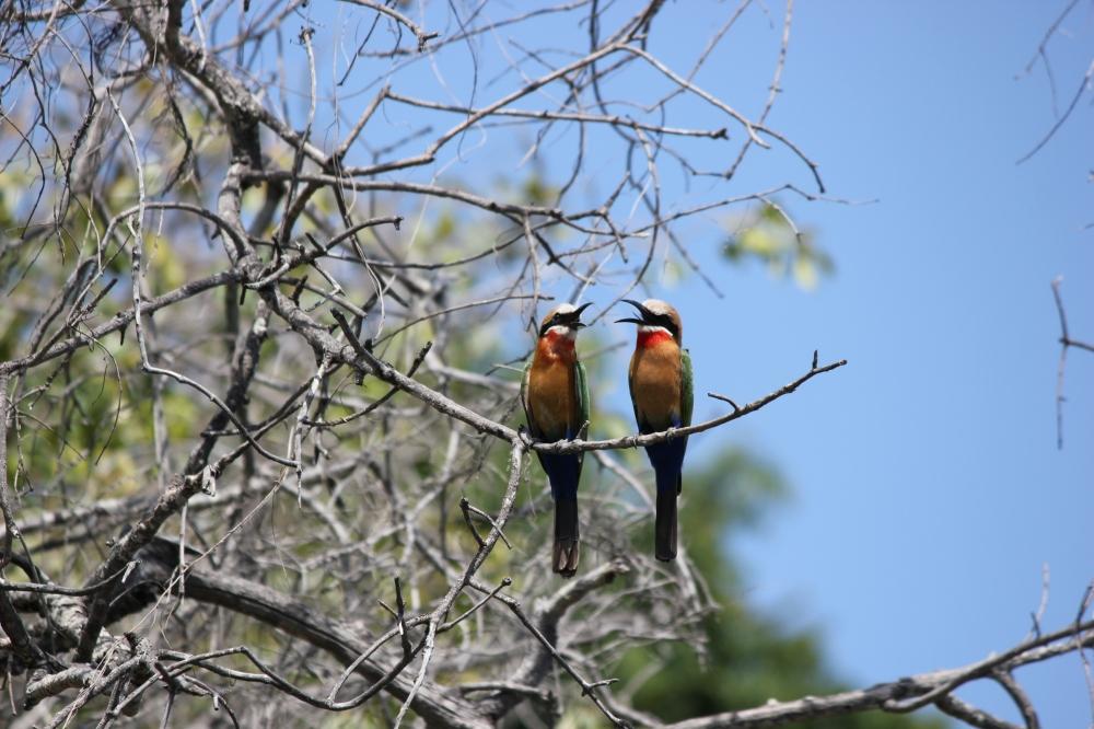 Holidays Victoria Falls