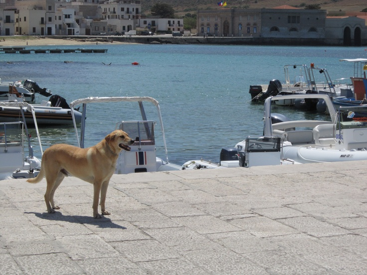 Harbour Security in Farfalla - Italy
