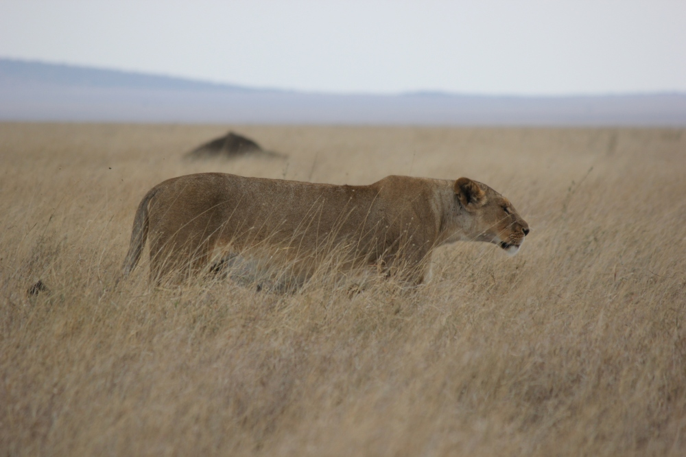 Serengeti Safari Honeymoon